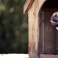 Pros y contras para elegir si nuestro perro va a vivir dentro o fuera de la casa