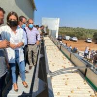 Ronda ya cuenta con una fábrica de procesado de pistachos con la tecnología más adelantada de Andalucía