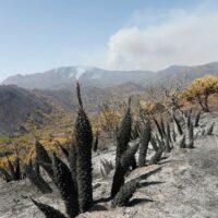 Solicitan ampliar a Sierra Bermeja la declaración de Parque Nacional para evitar más incendios forestales