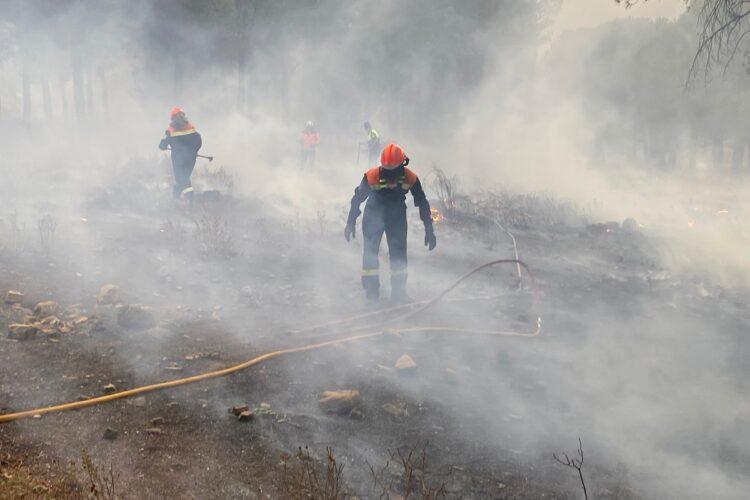 Apagan un incendio en el pinar de La Dehesa de Ronda que ha podido ser intencionado